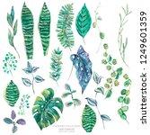 vector set of green exotic... | Shutterstock .eps vector #1249601359