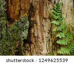 Magic Of A Forest  Fern Is...