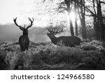 red deer in richmond park | Shutterstock . vector #124966580