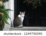 Small photo of London, UK. 04 December, 2018. Larry the Cat, Chief Mouser, arrives at the weekly Cabinet Meeting, 10 Downing Street.