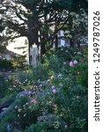 yokohama rose garden | Shutterstock . vector #1249787026