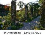 yokohama rose garden | Shutterstock . vector #1249787029