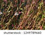 tiny white flower | Shutterstock . vector #1249789660