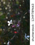tiny white flower | Shutterstock . vector #1249789663