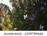 tiny white flower | Shutterstock . vector #1249789666