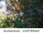 tiny white flower | Shutterstock . vector #1249789669