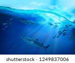underwater life in the tropical ... | Shutterstock . vector #1249837006