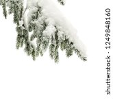 twig of christmas tree   spruce ... | Shutterstock . vector #1249848160