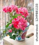 geranium zonal  pelargonium... | Shutterstock . vector #1249881133
