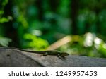 flora and fauna in a wild areas ... | Shutterstock . vector #1249957453