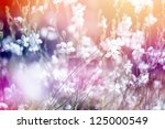 Stock photo flower background beautiful flowers made with color filters 125000549