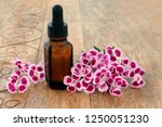 dianthus herb flowers used... | Shutterstock . vector #1250051230