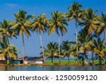 palm trees taken on the... | Shutterstock . vector #1250059120