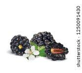 fresh  sweet and tasty... | Shutterstock .eps vector #1250091430
