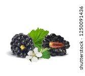 fresh  sweet and tasty... | Shutterstock .eps vector #1250091436