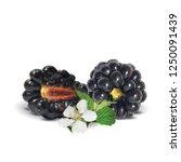 fresh  sweet and tasty... | Shutterstock .eps vector #1250091439