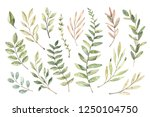 hand drawn watercolor... | Shutterstock . vector #1250104750