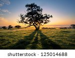 The Sun Rises Behind A Tree In...