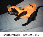Stock photo playful pumpkin kitten 1250258119