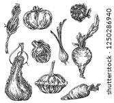 big set of vegetables. pumpkin  ... | Shutterstock .eps vector #1250286940