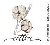 hand drawn cotton illustration... | Shutterstock .eps vector #1250328220