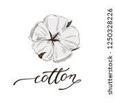 hand drawn cotton illustration... | Shutterstock .eps vector #1250328226