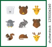 9 wildlife icon. vector... | Shutterstock .eps vector #1250336260