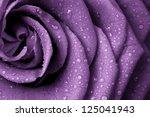 close up of violet rose petals | Shutterstock . vector #125041943