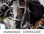 Close Up Of A Black Horse With...