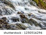 waterfall close up view with... | Shutterstock . vector #1250516296
