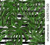 monstera pattern.  repeat... | Shutterstock .eps vector #1250575120