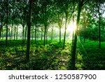 beautiful light of morning sun... | Shutterstock . vector #1250587900