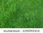 green grass texture for... | Shutterstock . vector #1250592313