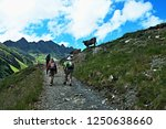 austrian alps view on the cows... | Shutterstock . vector #1250638660