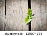 Small Plant Growing Below Wood...