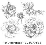 hand drawing flower blossom | Shutterstock .eps vector #125077586