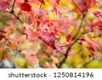 abstract background of colorful ...   Shutterstock . vector #1250814196