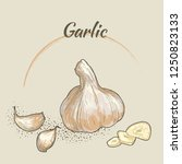vector garlic illustration... | Shutterstock .eps vector #1250823133