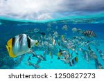 A School Of Tropical Fish...