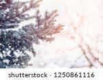 frosty winter landscape in...   Shutterstock . vector #1250861116