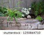 petschied  italy   july 14 ... | Shutterstock . vector #1250864710