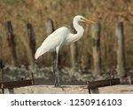 avian beautiful fauna | Shutterstock . vector #1250916103