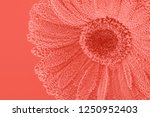 live coral color abstract... | Shutterstock . vector #1250952403