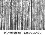 black and white photo of winter ...   Shutterstock . vector #1250966410