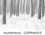 black and white photo of winter ...   Shutterstock . vector #1250966413