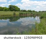 stagnant water with reeds ...   Shutterstock . vector #1250989903