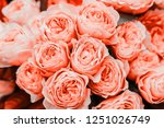 Stock photo beautiful living coral roses flowers bouquet close up spotted on the flower market 1251026749