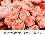 Beautiful Living Coral Roses...