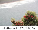 Red Flowering Bush In Front Of...