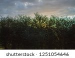 pastel colors in sunrise over... | Shutterstock . vector #1251054646